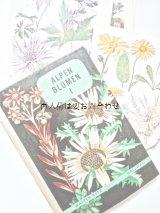 楽しい古本洋書☆ 難有り お手頃 アルプスの植物I 植物画   スイス 高山植物図鑑 ボタニカル アート