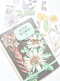 画像1: 楽しい古本洋書☆ 難有り お手頃 アルプスの植物I 植物画   スイス 高山植物図鑑 ボタニカル アート