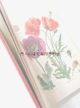 楽しい古本 洋古書★ 植物画 イラスト多数 植物学の本  高山植物  植物  薬草 コケ シダ キノコ
