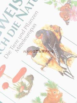 画像1: 楽しい古本洋書★ 大型古書   自然ガイド 海 森 動植物 昆虫 キノコ コケ 図鑑 イラスト 3000点