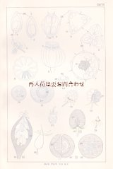 アンティーク★  植物学 ガイド   スケッチ 図版  ボタニカル イラスト