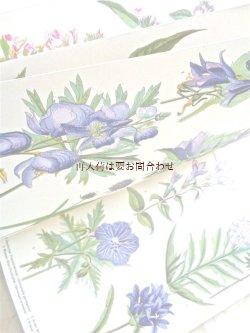 画像1: ☆楽しい古本 伸びるページの美しい図鑑 夏から秋の植物 ボタニカルアート 解説付