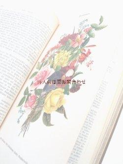 画像1: アンティーク洋書★希少 大型古書 植物の王国 ボタニカル イラスト多数  白黒 カラー図版 挿絵 多数