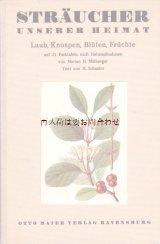 アンティーク 洋書★伸びるイラスト図版の素敵な本 21図版  ボタニカルアート 希少 植物画