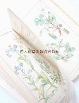 楽しい古本 洋書★ 50年代 ナチュラル  ヨーロッパ  ドイツ 春の花の本  植物 図鑑 ボタニカル