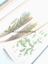 アンティーク★ ヤーコブ・シュトルム ボタニカル イラスト リンドウ属や小さな草花など