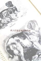 アンティーク 洋書★ 犬 猫 ペットの本 イラスト多数 ペット 家畜  動物 イラスト