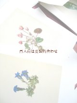 ボタニカル アート 印刷物 モリッツ・マイケル・ダフィンガー 植物画 リプリント 図録