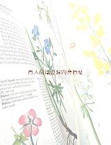 楽しい古本☆  草原と水辺の植物図鑑 植物画 イラスト多数  ボタニカル アート