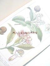 新着  再入荷☆豪華なカラーイラスト24図版付 植物学の本  ボタニカル