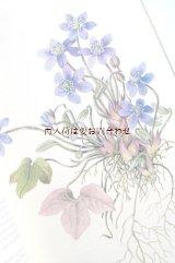 楽しい古本★ 有毒植物 観葉植物 植物画 イラスト ボタニカル アート 美リネン表紙